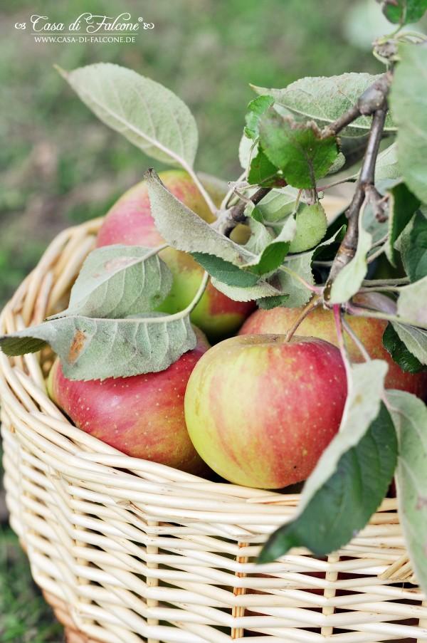 Apfelernte_2912