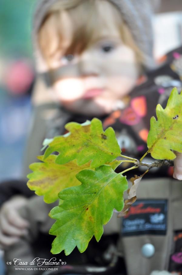 Herbstwald__2575