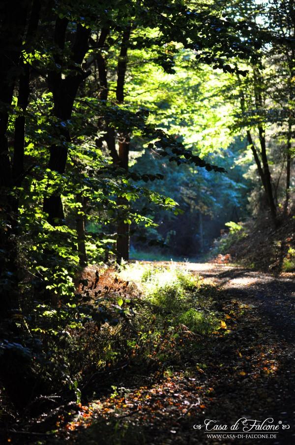Herbstwald__2659